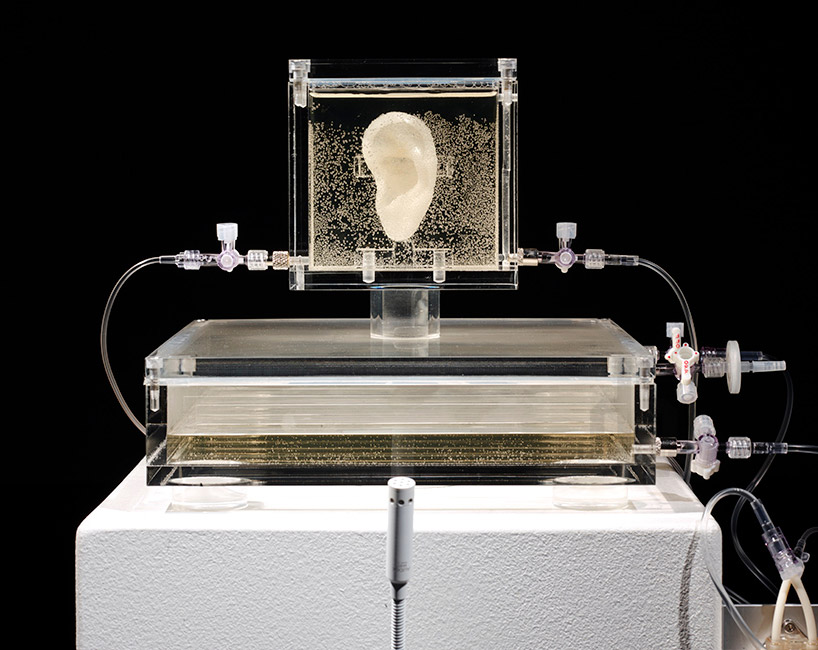 artist-has-grown-van-goghs-ear-with-DNA-and-a-3D-printer